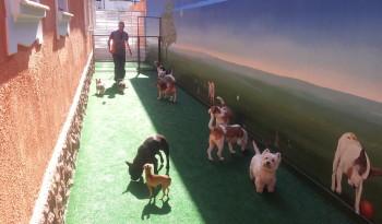 Creche cães 3