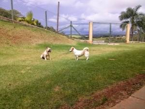 Cachorrinhos brincando no hotel para cachorros